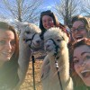 Apple Mountain's alpacas trained to work in call center and featured in corporate video