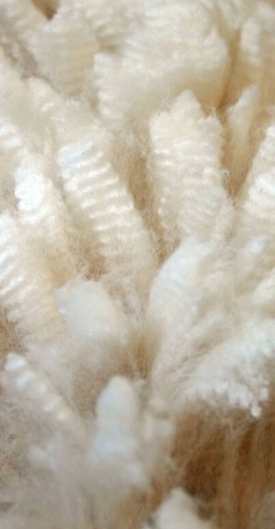 Offspring: Caliente Fleece